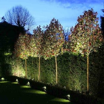 spiked floodlights to hedge